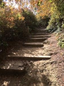山道が石段上に舗装されています