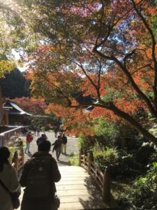 色づき始める日向大神宮の紅葉です