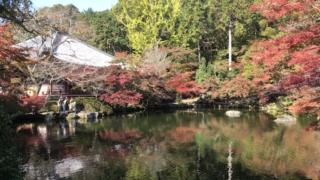 世界遺産・醍醐寺で色づき始める紅葉と2018年の台風被害/京都