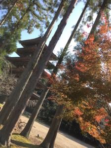 木々の隙間から見える醍醐寺の五重塔