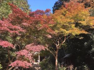 一番色づいていた紅葉の写真です