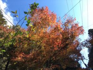 道中の木々の紅葉の様子です