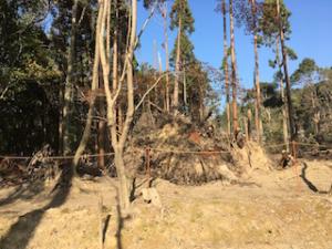 台風で倒れた醍醐寺の木々