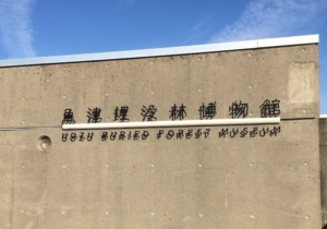 魚津埋没林博物館でした
