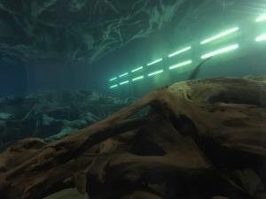同じ目線で見た水中の埋没林