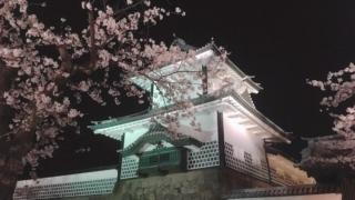 金沢城×夜桜♪ 金沢城公園に咲き誇る満開の桜たち/石川