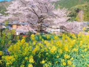 春を感じる花コラボ