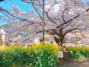 春を味わえます