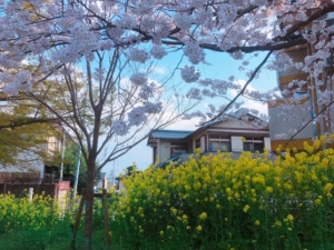 春と菜の花と空