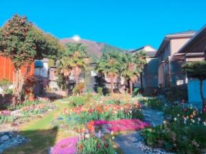 チューリップがたくさん咲く素敵な空間