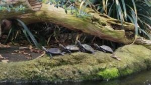 一列に四匹並んでいる亀がいました