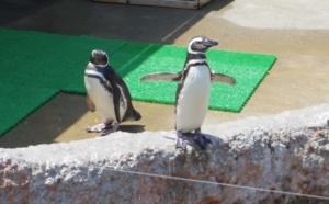 両手を広げるペンギンさん