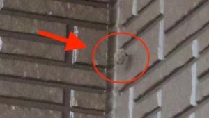 ベランダ端っこの小さなハチの巣
