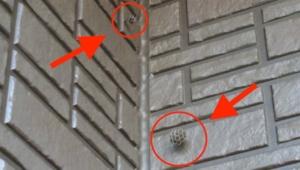 ベランダに二つ作られていた蜂の巣