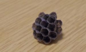 蜂の巣を至近距離で