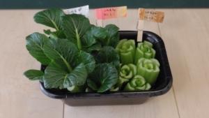小松菜の切れ端が増えます