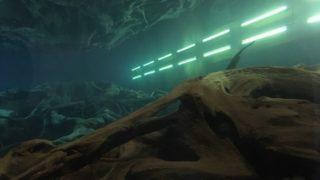 魚津埋没林博物館で「蜃気楼」と「埋没林」の不思議に触れてきた/富山
