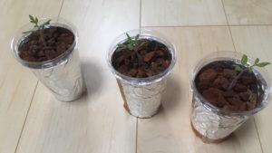 プラスチックカップで作った水耕栽培容器です