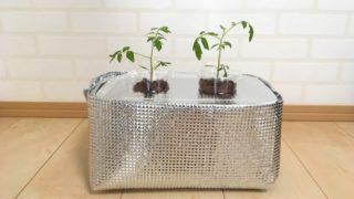 【水耕栽培】大きくなる野菜も水耕栽培!大きめタッパーで作った容器