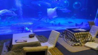 コタツでジンベエザメ、近距離のショー♪冬の「のとじま水族館」が楽しすぎる!