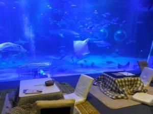 コタツのあるのとじま水族館