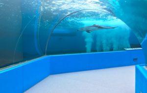 イルカのいるトンネル水槽