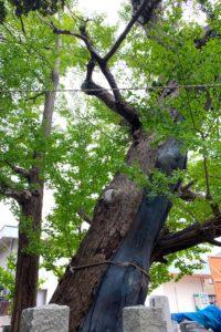 年月を感じる樹の様子