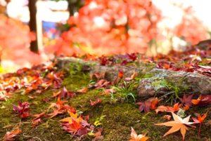 地面に落ちた紅葉