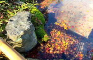 紅葉の浮かぶ水面