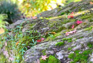 苔の生えた岩にも紅葉