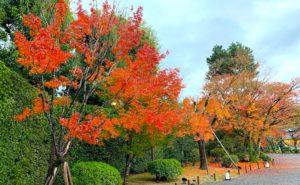 平等院の紅葉が綺麗