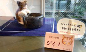 愛猫ジイノちゃんと写真が撮れるスポット