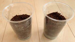 ココピートとゼオライトの種を容器に入れました