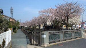 御経塚の桜並木