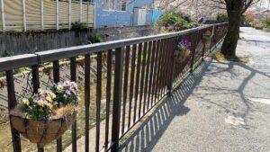 川沿いにあるパンジーの花かご